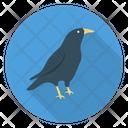 Crow Bird Halloween Icon