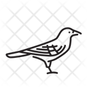 Crow Bird Animal Icon