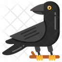 Crow Blackbird Bird Icon