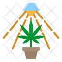 Cultivation Healthcare Agriculture Icon