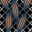 Cumin Cumin Seed Caraway Icon