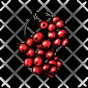 Currant Gooseberry Black Currant Icon