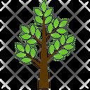 Curry Tree Murraya Icon