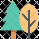Cypress Tree Fir Icon