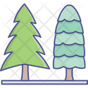 Cypress Tree Evergreen Trees Forest Icon