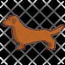 Dachshund Animal Canine Icon
