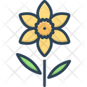 Daffodil Jonquil Primrose Icon