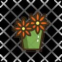 Daisies Daisies Plant Flower Plant Icon