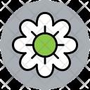 Daisy Flower Spring Icon