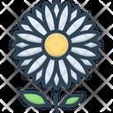 Daisy Bellis Perennis Marguerite Icon