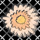 Daisy Flower Plant Icon