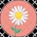 Daisy Blossom Camomile Icon