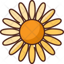 Daisy Flower Nature Icon
