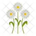Daisy Flowers Icon