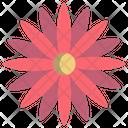 Dalia Flower Dalia Flower Icon