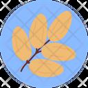 Dates Arabic Dates Palm Icon