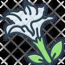 Datura Stramonium Jimsonweed Nightshade Icon