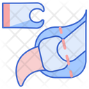 Declawing Claw Surgery Icon