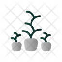Decoration Plant Icon