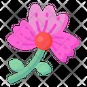 Dianthus Icon