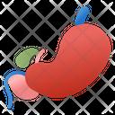 Digestive System Icon