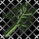 Dill Plant Spice Icon