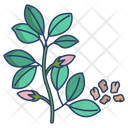 Dill Herbal Spices Icon