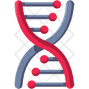 Dna Structure Dna Structure Icon