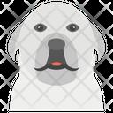 Dog Domestic Animal Pet Icon