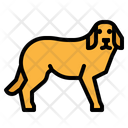 Dog Tags Pet Icon