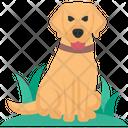 Dog Pet Domestic Icon