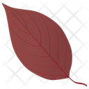 Dogwood In Fall Icon