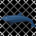 Dolphin Sea Icon
