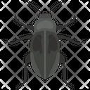 Dor Bug Insect Ladybug Icon