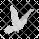Dove Animal Wildlife Icon
