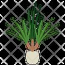 Dracaena Marginata Plant Icon