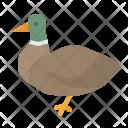 Duck Animal Animals Icon