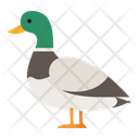 Artboard Animal Pet Icon
