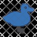 Duck Swim Bird Icon