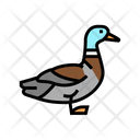 Duck Bird Color Icon
