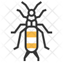 Earwig Insect Bug Icon