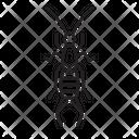 Earwig Bug Insect Icon