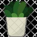 Echeveria Indoor Plant Icon