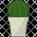 Echinocereus Potted Plant Icon