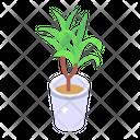 Indoor Plant Eco Plant Decorative Plant Icon