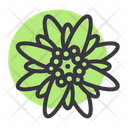 Edelweiss Icon