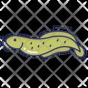 Eel Sealife Animal Icon