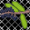 Elderberry Icon