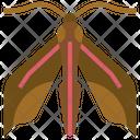 Elephant Hawk Moth Animal Kingdom Caterpillar Icon