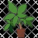 Eleuthero Potted Plant Icon